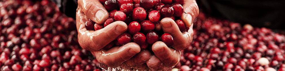 PEI_09_cranberries-home-full